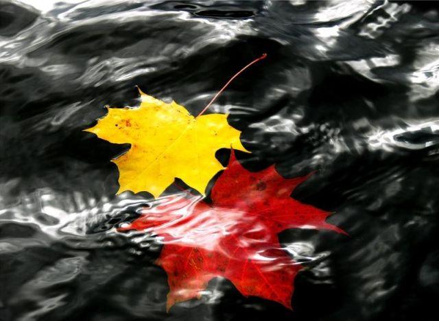autumn latvia 29 - Autumn in Latvia