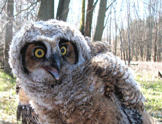 Smiling Owls (21 pics)