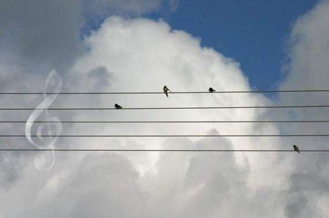 птиче петолиние