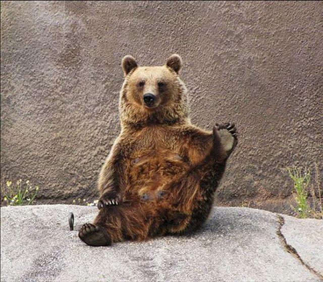 http://izismile.com/img/img3/20100915/640/these_funny_animals_489_640_19.jpg