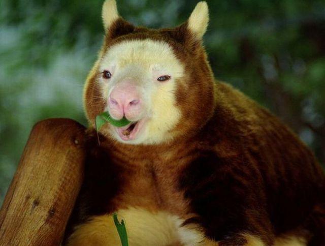 超级可爱的动物们 - 萝卜英子的日志 - 网易博客
