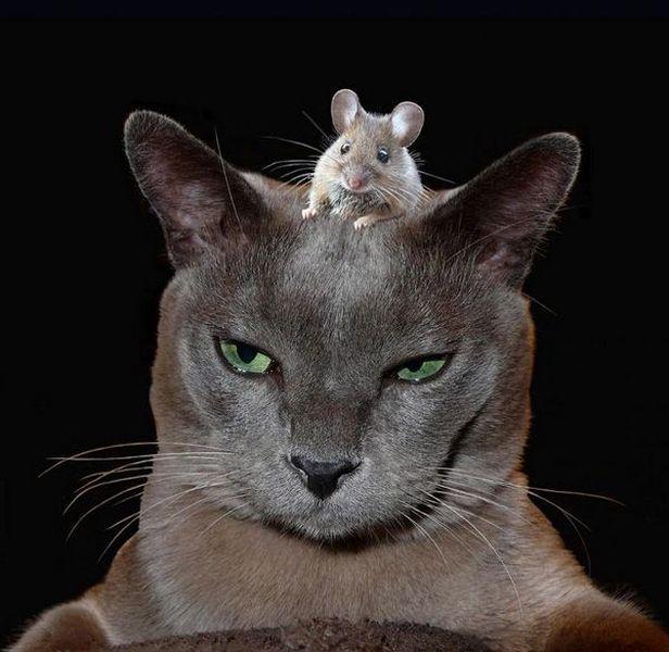 有趣的动物 - 萝卜英子 - 萝卜英子の美好人生