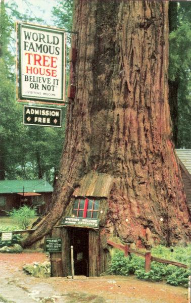 Beautiful Tree Houses (35 pics)