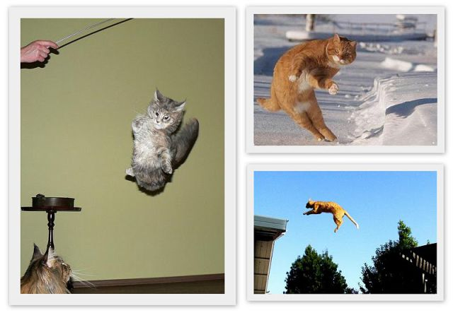 Cats Can Fly (14 pics)