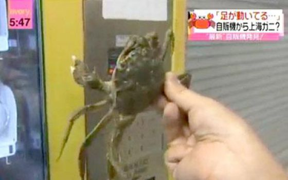 Uncanny Factoid: Got Crabs?  Chinese Do! (3 pics + 1 video)