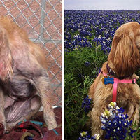 Incredible Transformation Pics of Rescued Dogs  (16 pics)