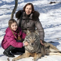The Family Who Are Really Living with Wolves  (11 pics + 1 video)
