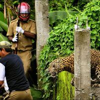 A Wild Leopard Attacks Innocent Bystanders in India  (7 pics)