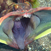 Some of the Many Unusual and Bizarre Creatures of the Sea  (26 pics + 6 gifs)