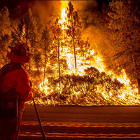 Devastating Forest Fires Wreak Havoc in California  (24 pics)