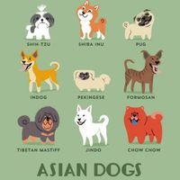 A Guide to Which Nationality Your Dog Really Comes from  (15 pics)