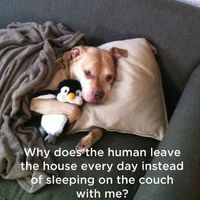 What Your Dog Is Really Thinking  (11 pics)