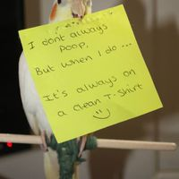 Birds Have Moments of Public Shame Too  (23 pics)