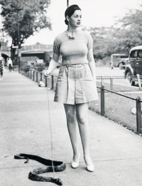 Now You Can Walk Your Pet Reptile