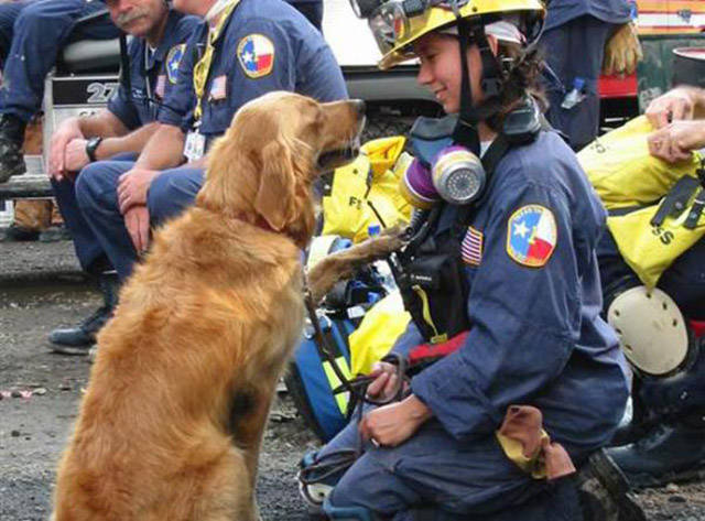 This 9/11 Rescue Dog Gets the Best Sweet 16 Birthday Surprise Ever