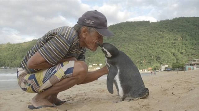 Man Saves A Penguin Who Now Swims 8,000 Km To See The Man Every Year
