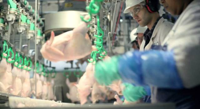 This Is How Chicken McNuggets Are Made