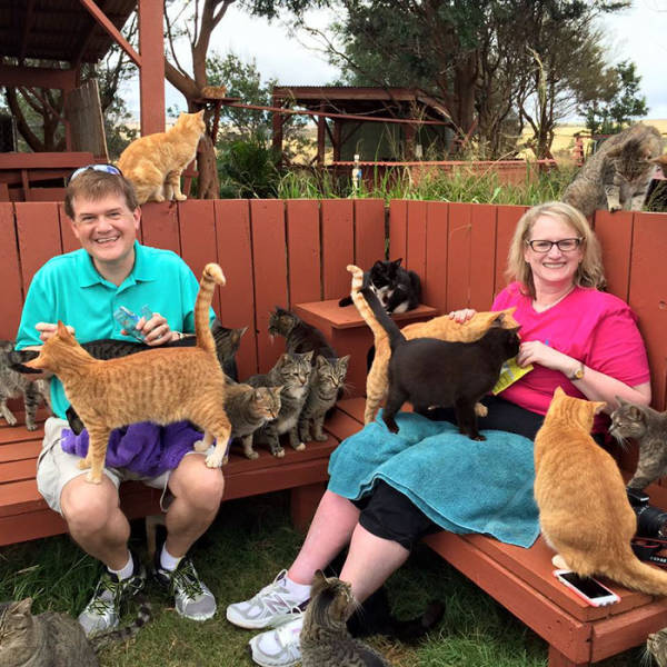 There Is A Cat Sanctuary In Hawaii Where People Come From All Over The World To Pet Them