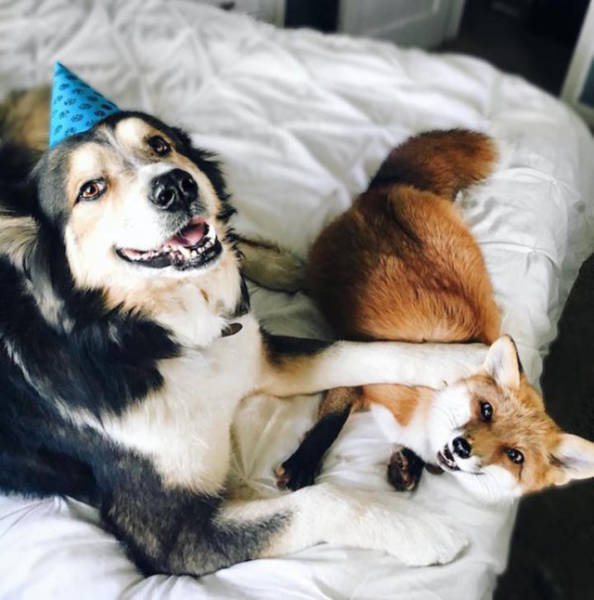 A Fox And A Dog: The Cutest Couple You Will Ever See