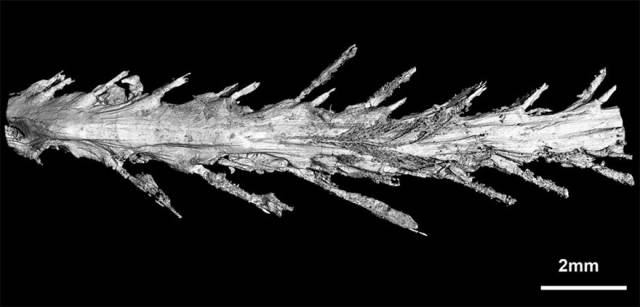99-Million-Years-Old Dinosaur Tail Covered In Feathers Was Found Preserved In Amber